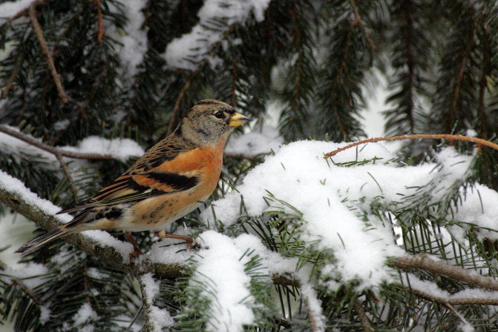 vögel rolladenkasten styropor